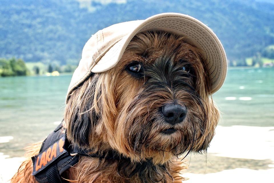 In viaggio con gli animali: come comportarsi in vacanza