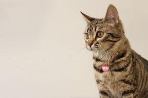 Consigli pratici lavare un gatto